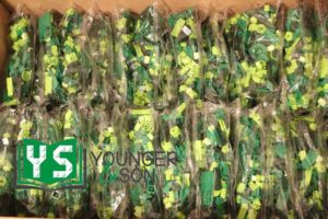 bags of smaller green, lime and yellowish green LEGO elements